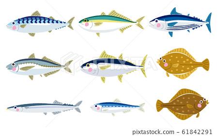 다양한 물고기의 일러스트 61842291