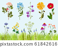 Flowers collection. Botanical wild plants field meadow vector drawing in cartoon style 61842616
