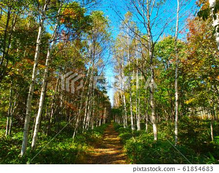 숲속의 오솔길 61854683