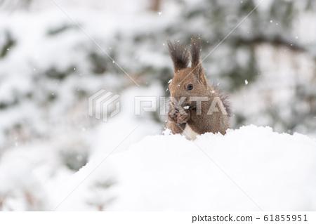 Ezoris in winter 61855951