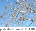 Winter view of maple buffalo in Chiba Park 61864306