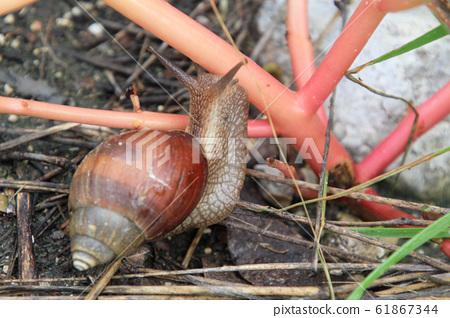 蝸牛在納米比亞埃托沙國家公園的地面上 61867344