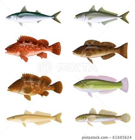 鹹水魚圖(彩色)設置4 61885624
