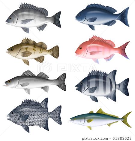 鹹水魚圖(彩色)設置5 61885625