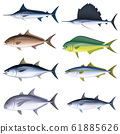Saltwater fish illustrations (color) set 6 61885626
