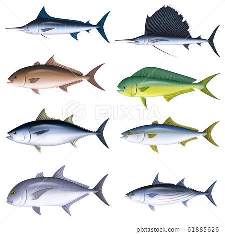 鹹水魚插圖(彩色)設置6 61885626