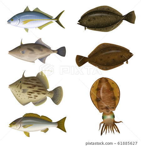 Saltwater fish illustration (color) set 7 61885627