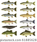 Freshwater fish illustration (color) set 1 61885628