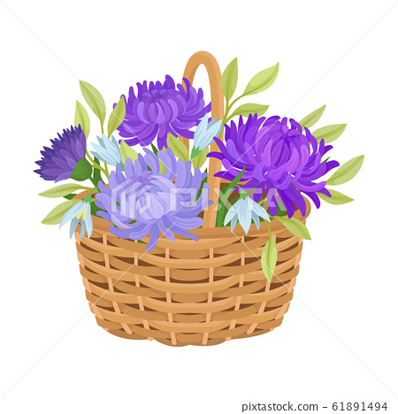 Floral Arrangement with Aster in Wicker Basket Vector Illustration 61891494
