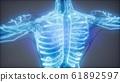 Blood Vessels of Human Body 61892597