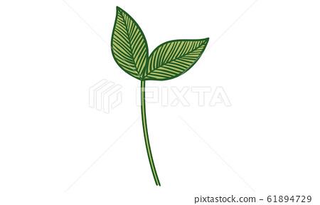 植物插圖:樹葉,靜脈,原始圖像 61894729