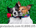 couple of dogs in love very close together lying 61896105