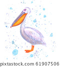 Pelican watercolor. Hand drawn white bird with 61907506