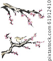 Ink painting touch plum and warbler 61912410
