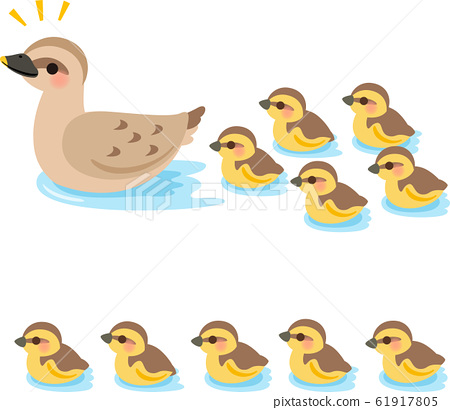 Duck parent and child swimming on the water surface 61917805