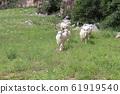 山羊 61919540