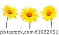 Yellow daisy on a white 61922051