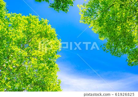 新鮮的綠色和藍天[長野縣] 61926825