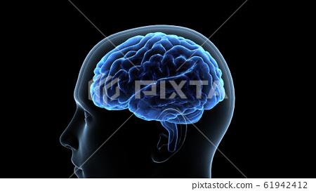 뇌 두뇌 브레인 머리 머리 머리 마인드 아이디어 3D 일러스트 CG 61942412