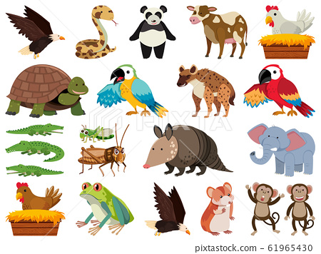 Set of isolated objects theme wild animals 61965430