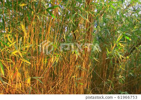 25 dec 2008 the nature of the trees at hong kong 61966753