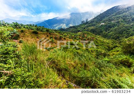 Jamaica Blue Mountains coffee grow landscape view 61983234