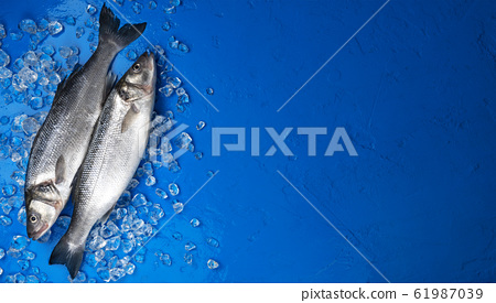 Seabass fish on ice on blue color background, top view 61987039