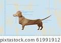 迷你腊肠犬水平明信片 61991912