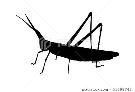 動物剪影昆蟲蚱hopper 3 61995743
