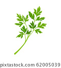 Parsley Twig as Kitchen Herb for Cooking Vector Element 62005039