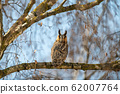 Owl sit in a tree and looking on the the camera 62007764
