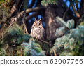 Owl sit in a tree and looking on the the camera 62007766