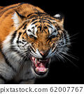 Angry tiger portrait isolated on black background 62007767
