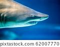 Underwater great white shark 62007770