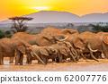 Elephant in water. National park of Kenya 62007776