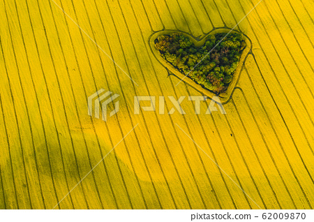Real heart shaped copse of forest among rape 62009870