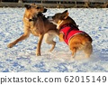 Playing and playing with dogs 62015149