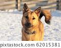 Hybrid dog 62015381