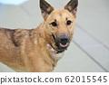 Hybrid dog 62015545