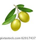 Vector realistic olive branch with two green olives 62017437
