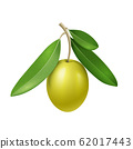 Vector realistic olive branch with green olive fruit 62017443