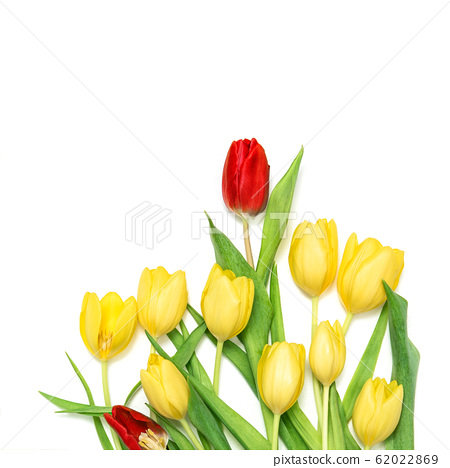 Tulip flowers red yellow bouquet white background 62022869