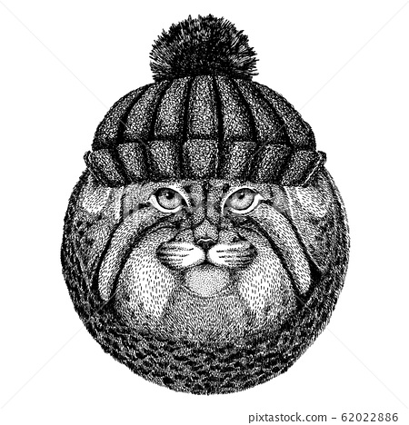 Wild cat Manul Cool animal wearing knitted winter hat. Warm headdress beanie Christmas cap for tattoo, t-shirt, emblem, badge, logo, patch 62022886