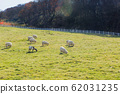 Livestock farm, cattle, dairy cattle, sheep and goat 097 62031235