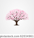 Cherry Blossom / Sakura tree vector illustrations 62034961