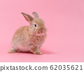 Red-brown cute baby rabbit sitting on pink background. Lovely young rabbit sitting. 62035621