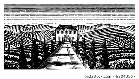 Scenic view of vineyards. Wide panoramic vine plantation in Chianti. French or Italian engraved 62043957