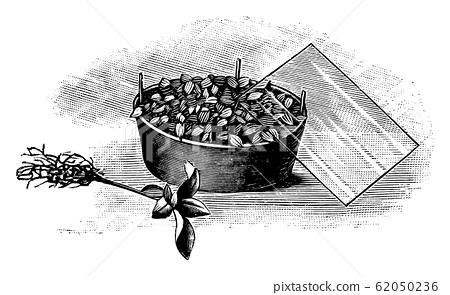 Vintage Antique Line Art Illustration, Drawing or Engraving of Growing of Plant Seedling Under Cover 62050236