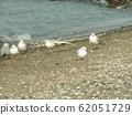 黑头鸥在Kemigawahama沙滩上休息 62051729
