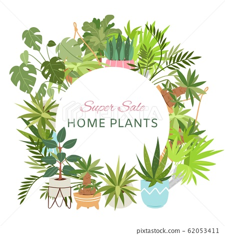 Home plants in circle wreath sale poster vector illustration. Houseplants, indoor and office plants in pot. Dracaena, spathyfyllium and orchids, aloe vera with gerbera, snakeplant. 62053411